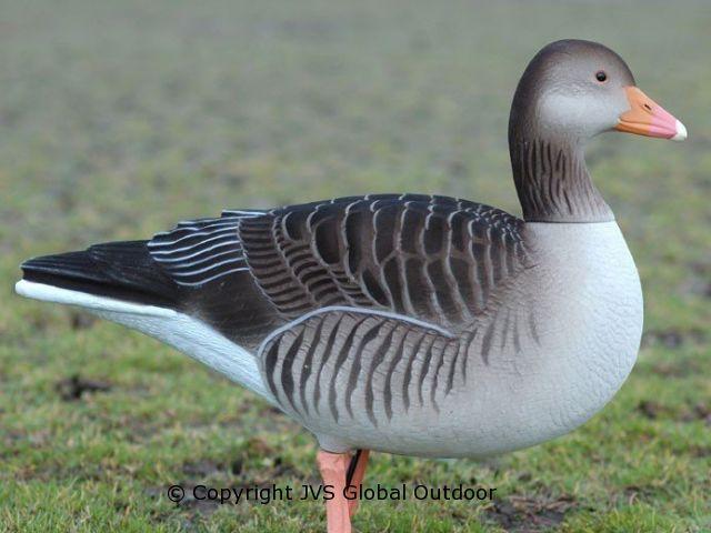 DKwai Greylag Goose decoy set 6 pieces full body